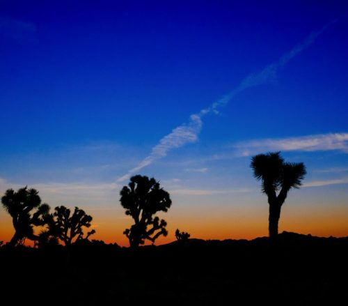 Sunset In Joshua Tree, CA